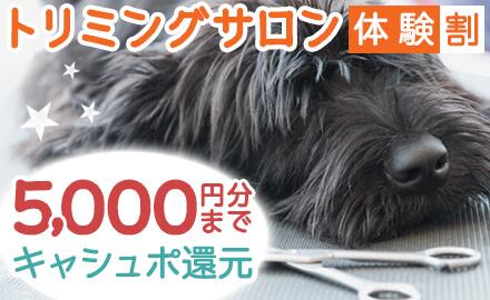 【トリミングサロン体験割】口コミを投稿して5,000円までキャッシュバック!