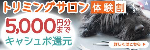 【トリミングサロン体験割】口コミを投稿して5,000円までキャシュポ還元!