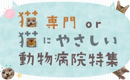 猫専門or猫にやさしい 動物病院特集