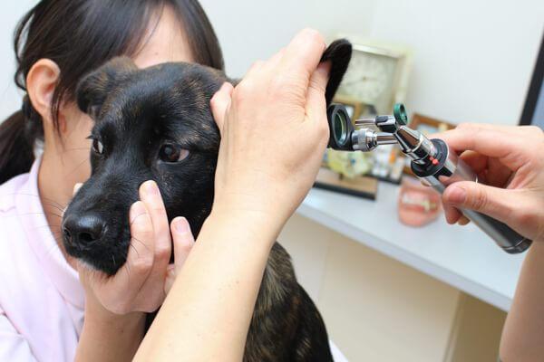 皮膚科と消化器内科の診療に力を入れている動物病院