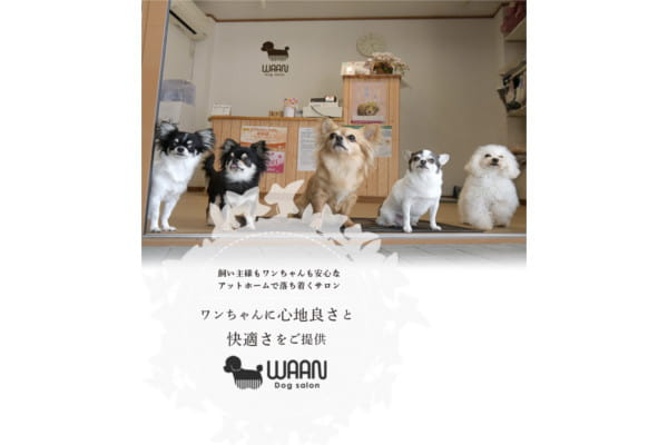 Dog salon WAAN