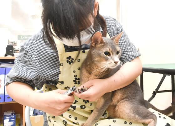 ワンちゃんのみならずネコちゃんのトリミング可能
