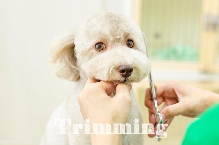 ペットと飼い主さまの生活をトータルで応援してくれるトリミングサロン