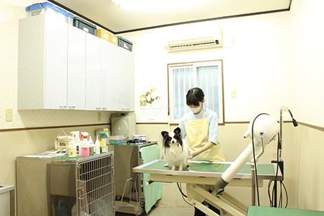 めじろ台どうぶつ病院(旧 大津動物病院)(トリミング)のメイン画像
