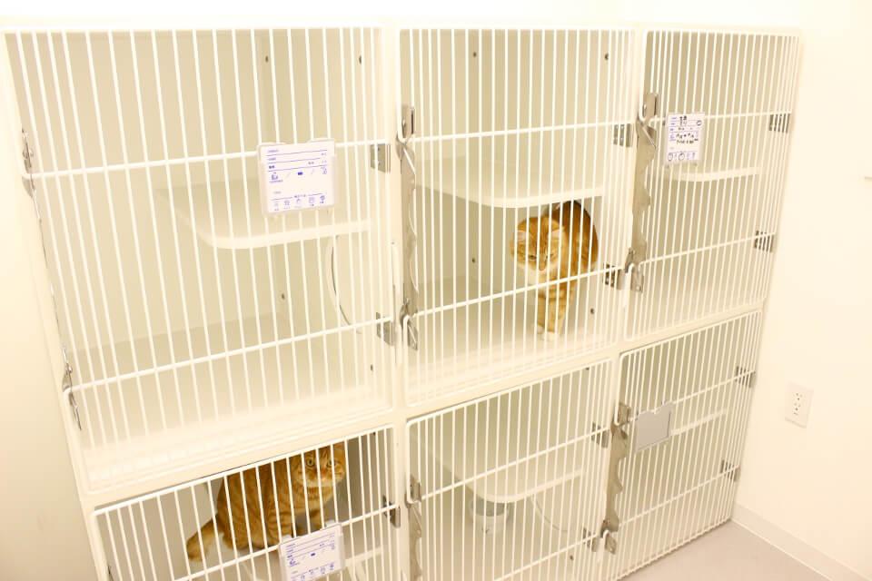 猫にとっての快適さを追求した病院