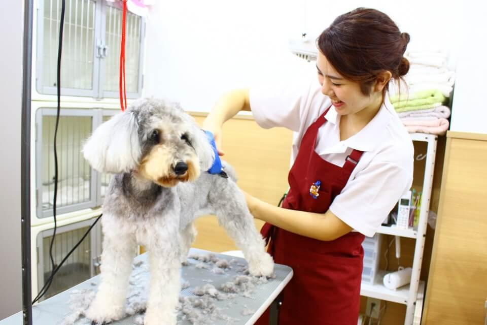 dogsalon&cafe Copinのメイン画像