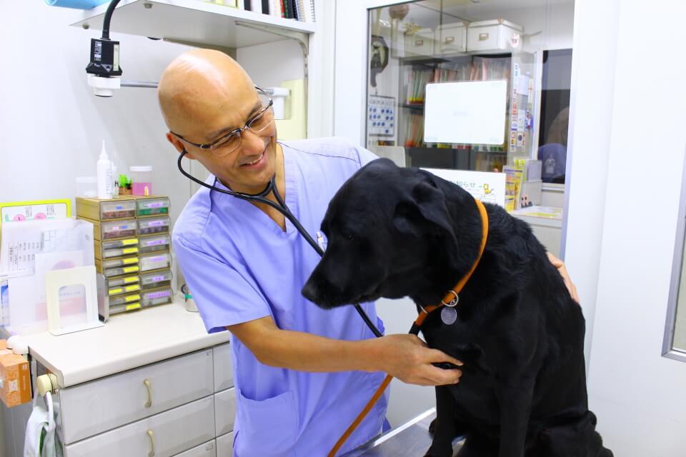 毎週土曜日、循環器に熟達した獣医の診察あり