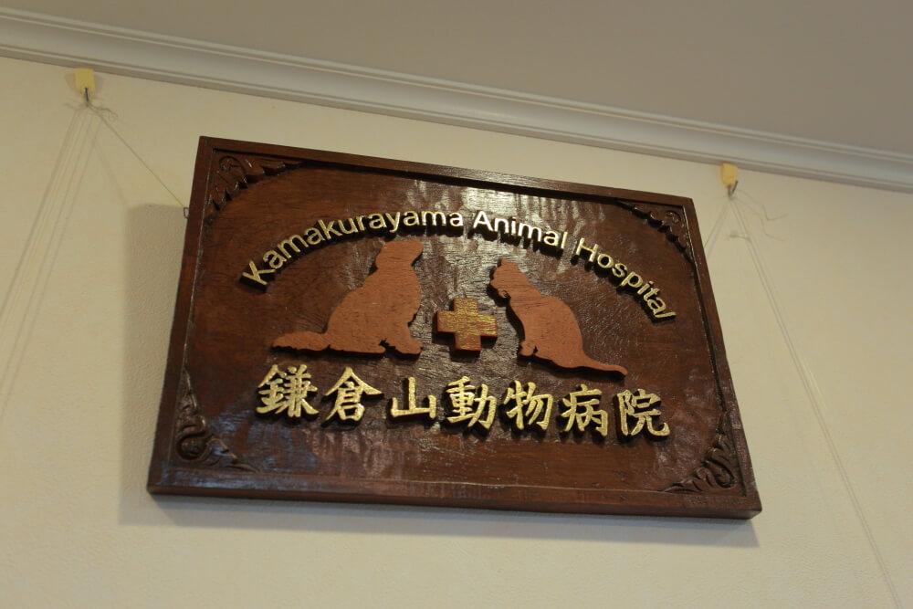 自然に囲まれた解放的な鎌倉山動物病院は土日祝日も診察可!