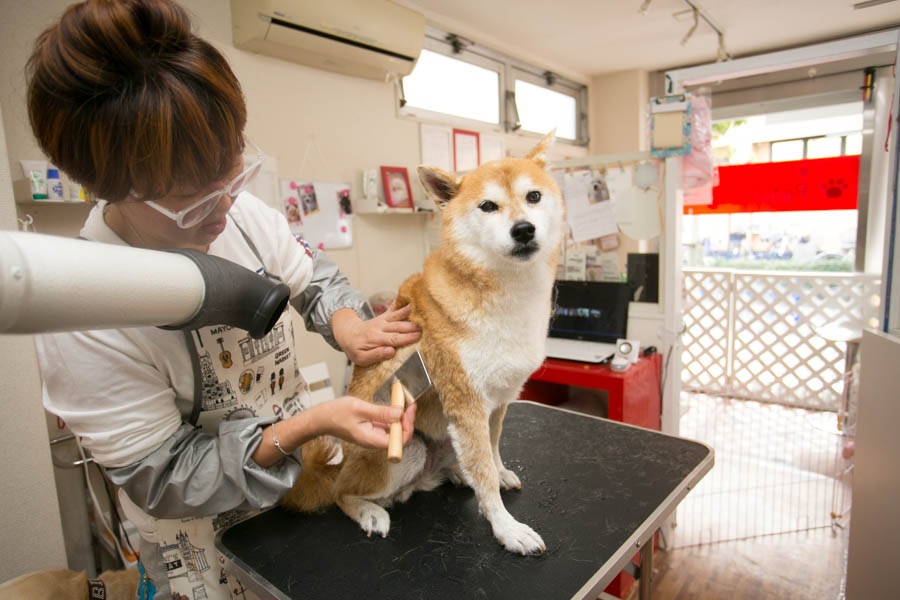 Petit Dog施術画像