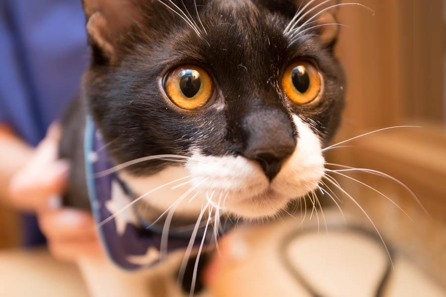 猫ちゃんの定期的な予防を重要視