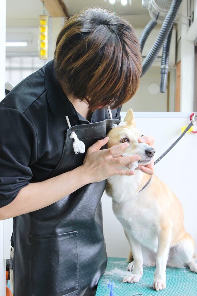 犬と猫の美容室 キムラ