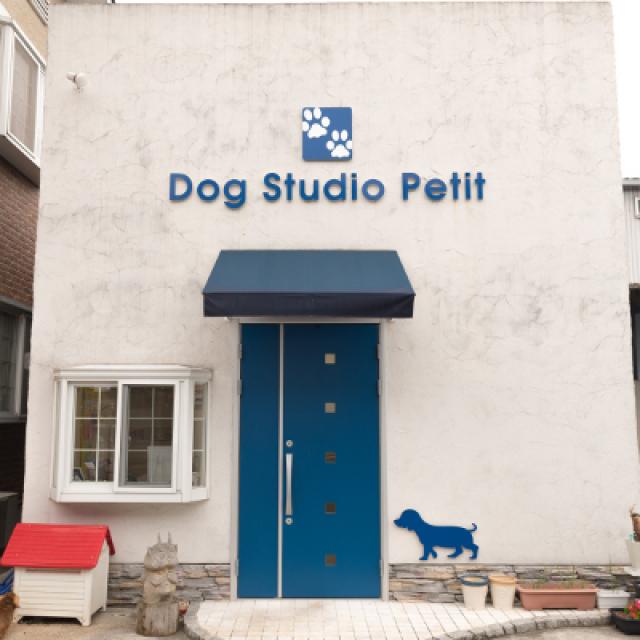 Dog Studio Petit