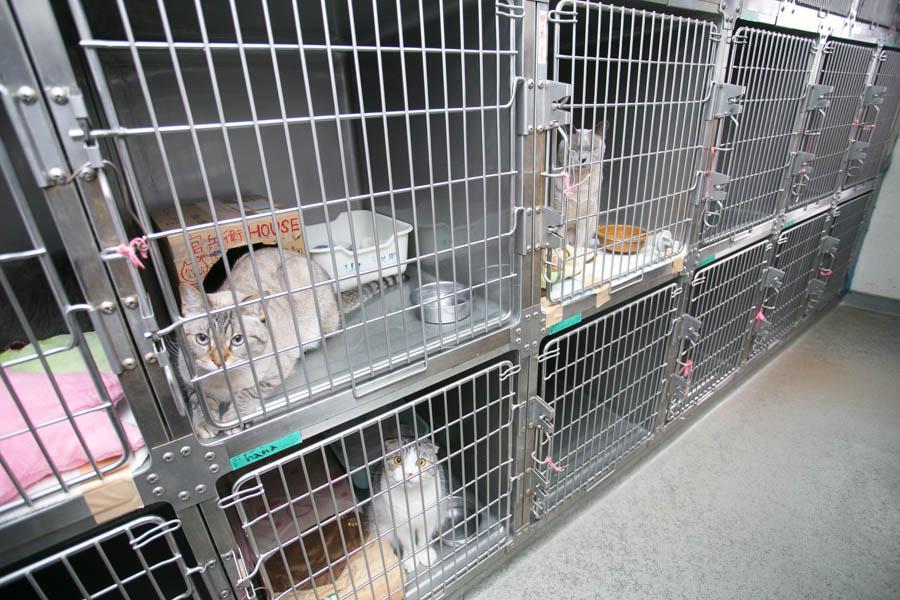 病気の予防に力を入れている動物病院
