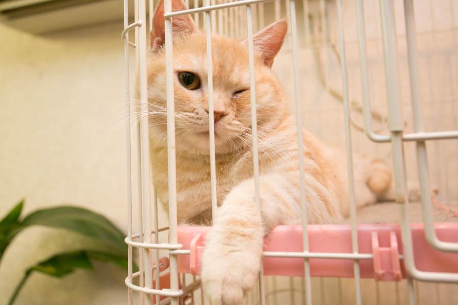 犬猫俱楽部 ウィズ猫写真