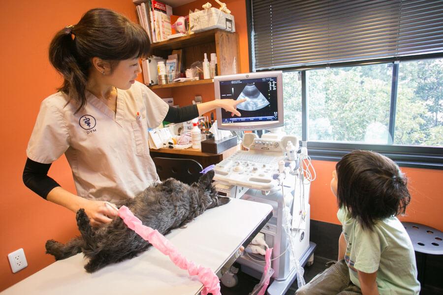 わかば犬猫病院 横浜西口駅前施術画像
