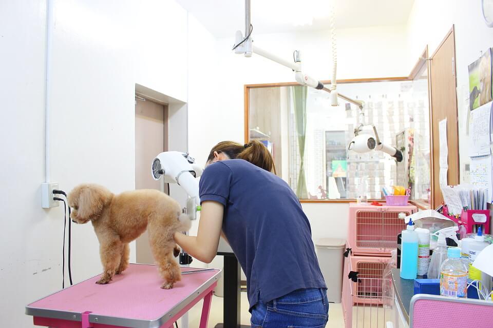 Pet shop With
