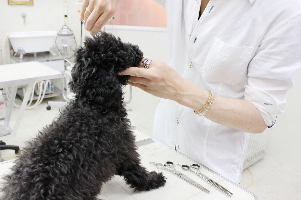 pet salon Dearest施術画像