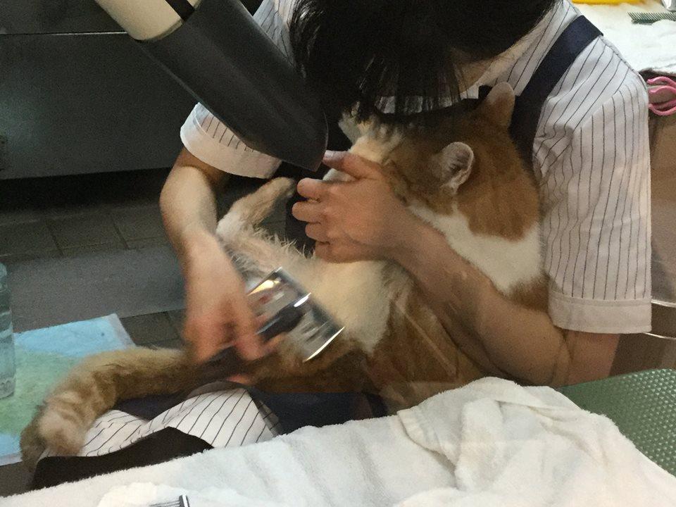 ネコちゃんに慣れたトリマーがいるトリミングサロン