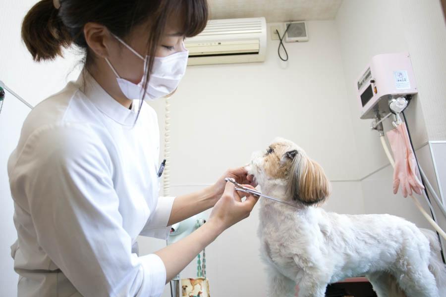 新宿犬猫病院(トリミング)のトリミング風景