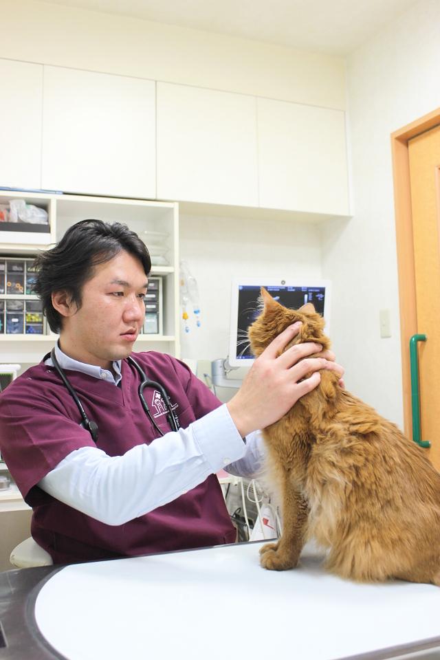 大井町どうぶつ病院の診療画像