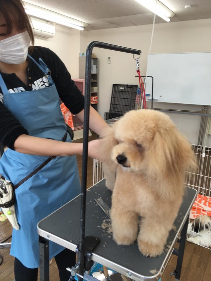 湘南 Dog Collegeのメイン画像
