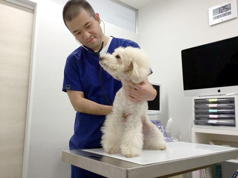 週末も開院している動物病院