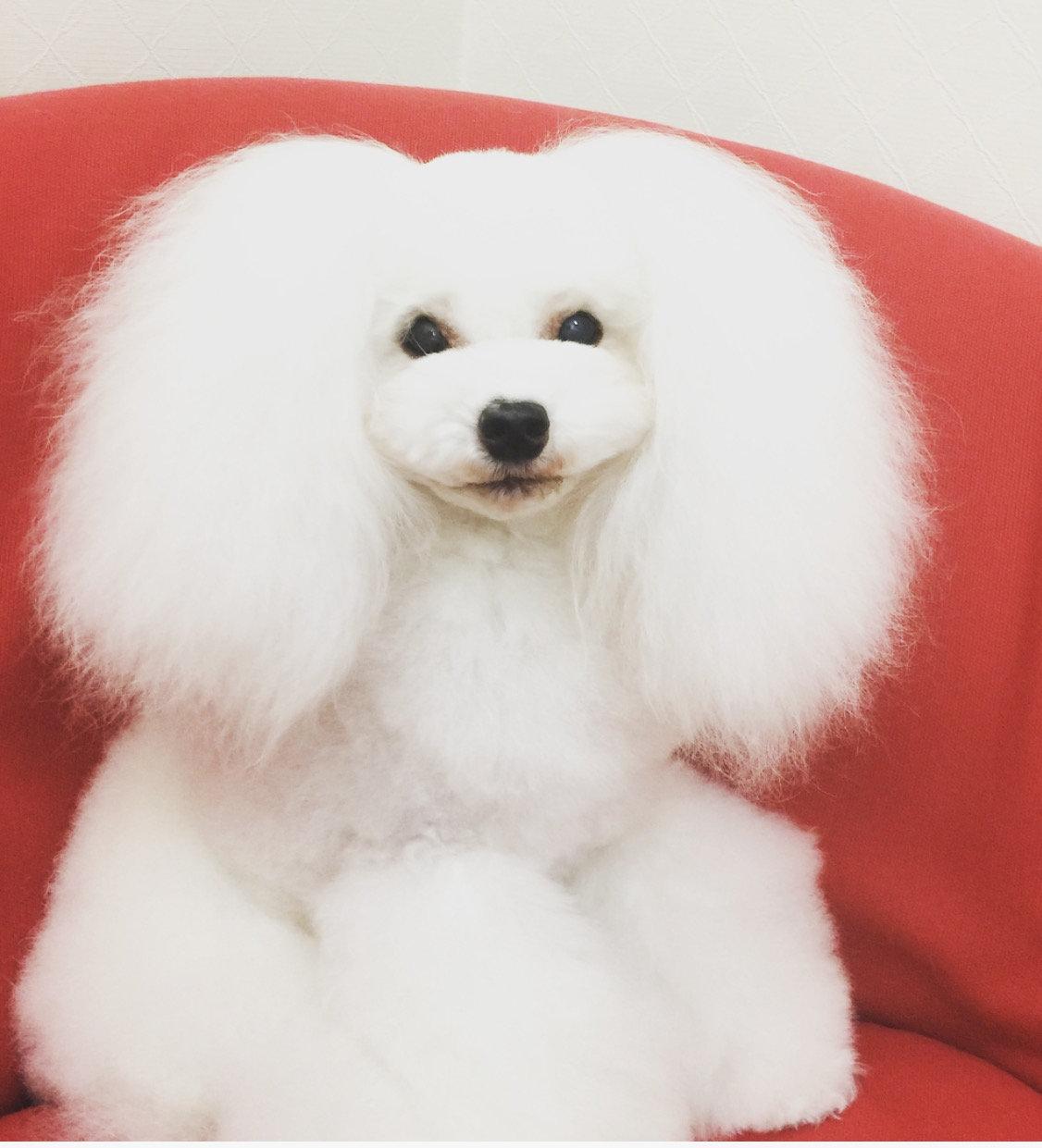 Dog Salon N.o.b
