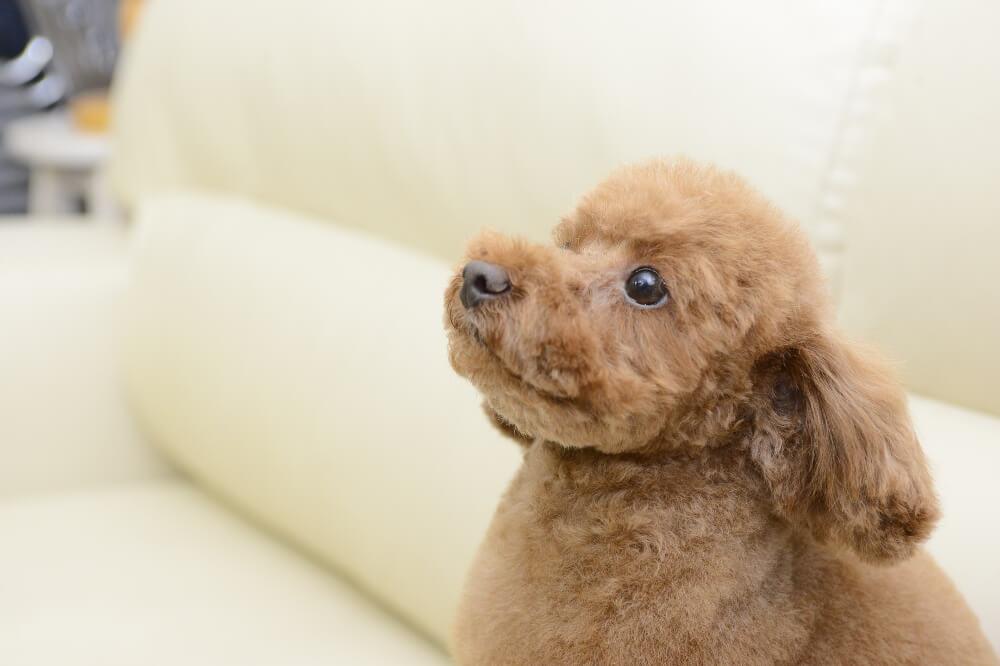 Dog Grooming Salon pretty pooch