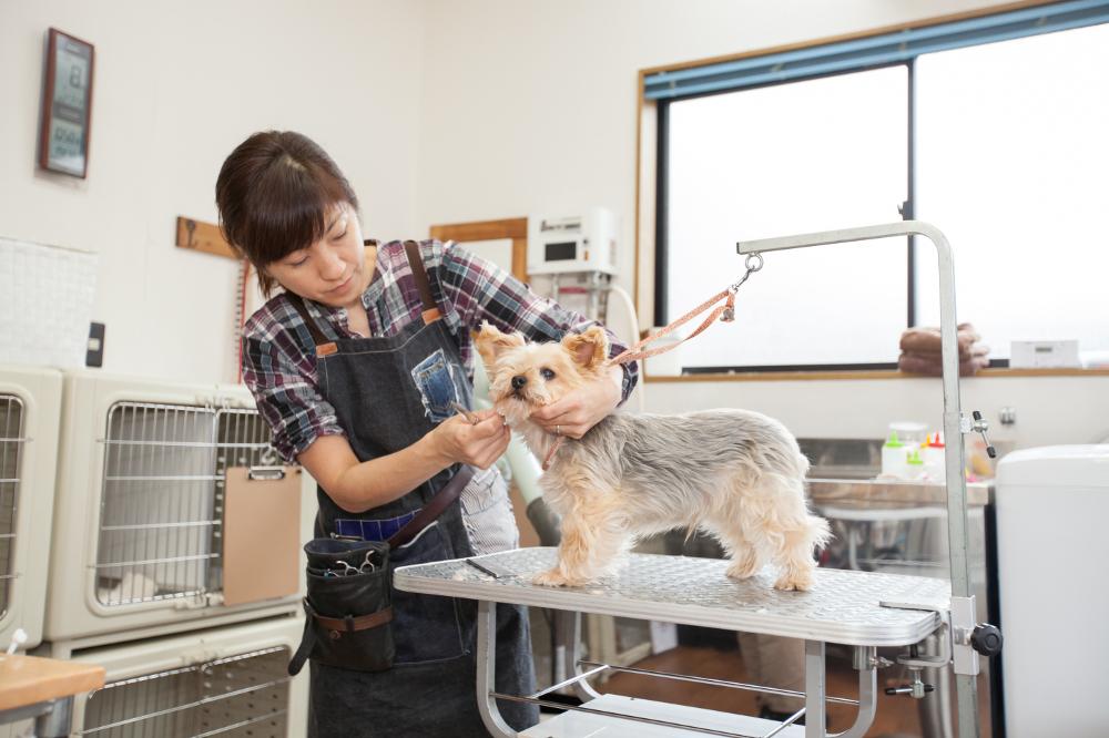Dog salon be happy