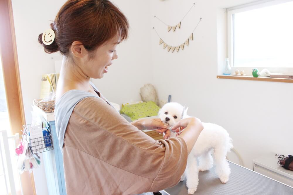 pet salon monchouchou