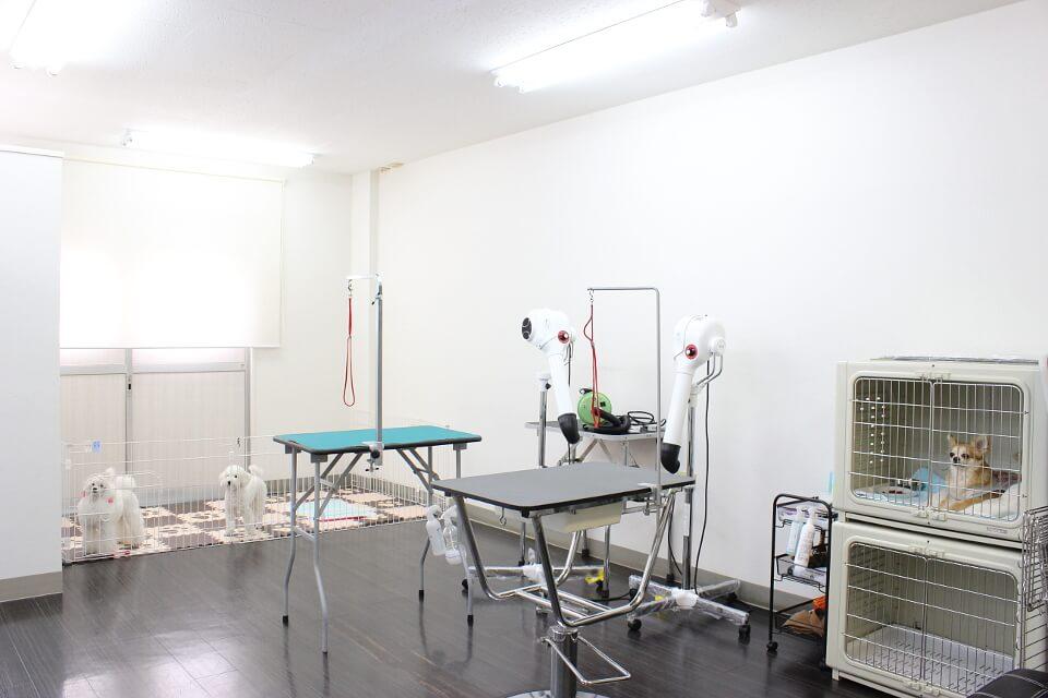 Dog Salon REGISTA(ドッグサロン レジスタ)
