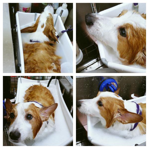 Dog Salon パセリ