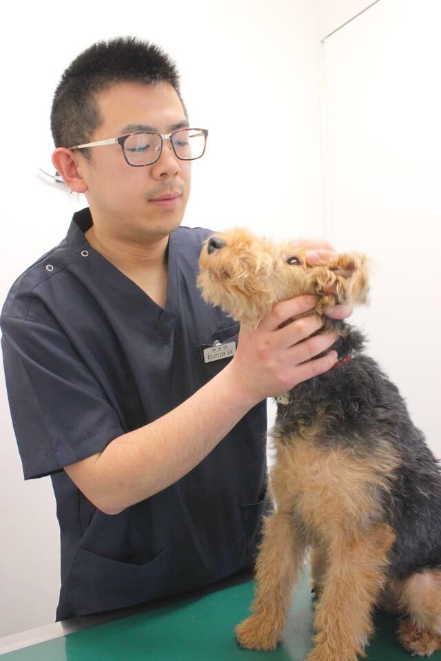 火曜・土曜にネコちゃん専用診療あり!安心できる病院を目指す