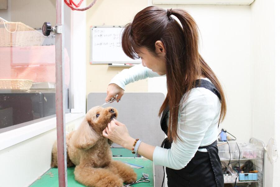 Dog Salon A's