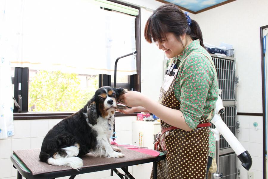 MISA(大倉山動物病院ペットサロン)のメイン画像