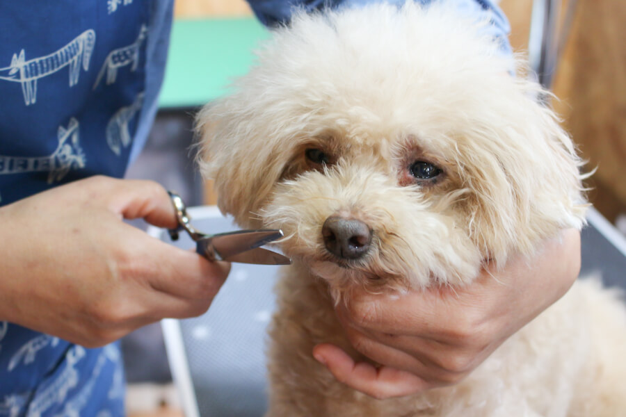 Dog Salon&Aloma Sunny Leoのトリミング画像