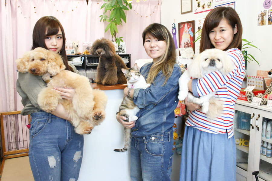 dog salon KotaKuna
