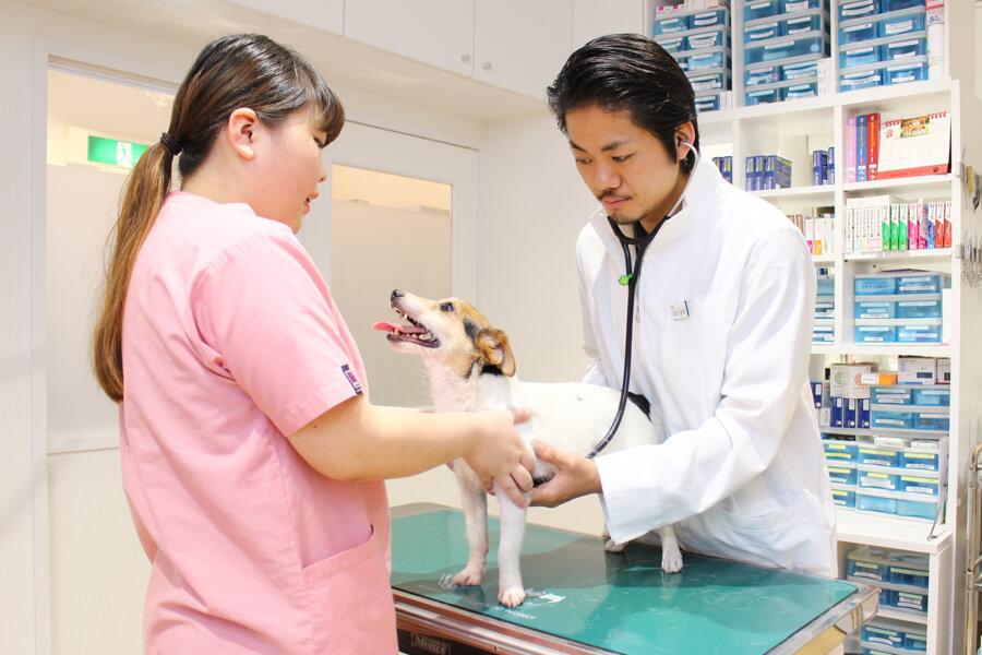 SHIBUYA フレンズ動物病院(トリミング)