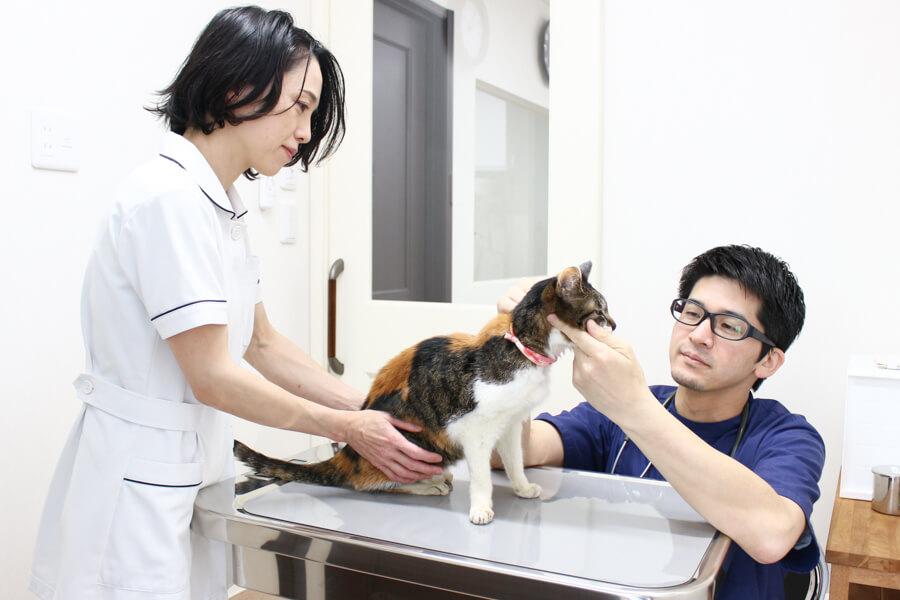 西湘動物病院