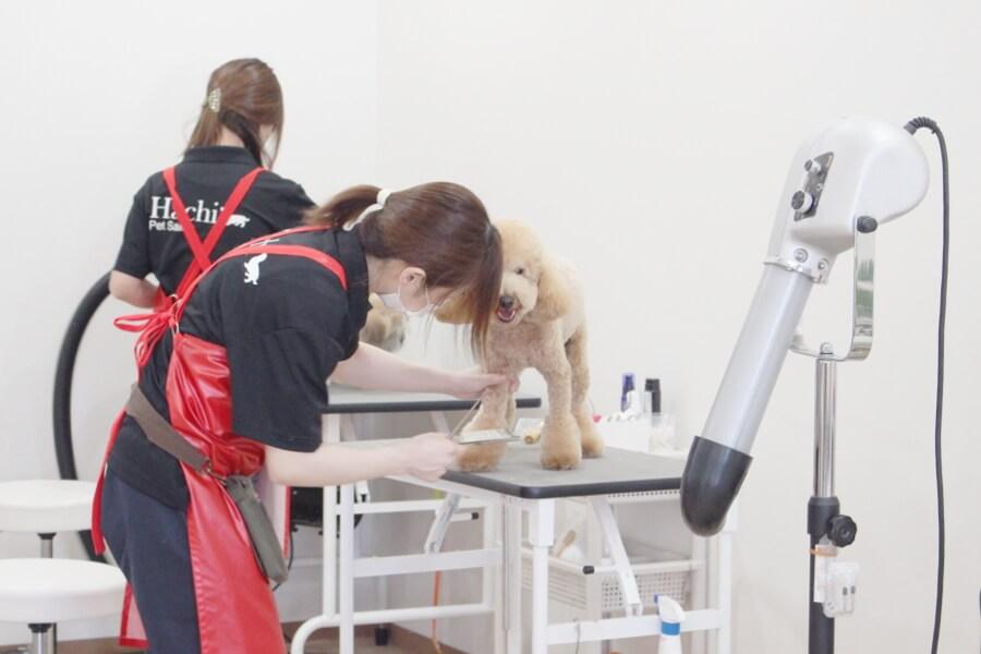 ペットサロン8 岩出駅前店メイン画像