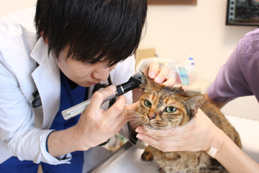 エルムス動物医療センター八幡山院の診療画像