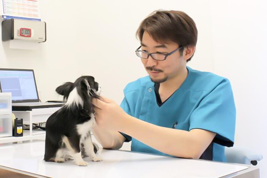 いちも動物病院 診察中写真