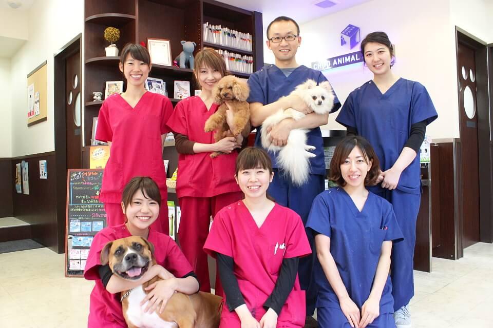 中央区(東京都)の動物病院3選!口コミで評判の施設など