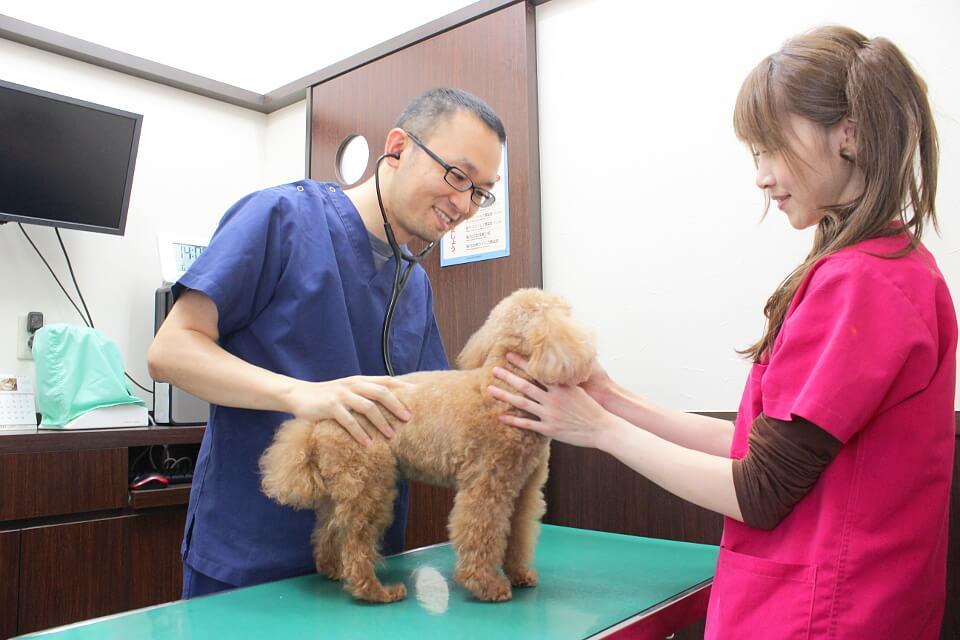 専門性の高い分野も!動物の健康を総合的にサポート