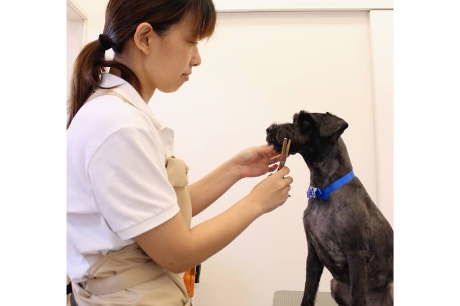 beSide -Pet Life Ichimo 与野-