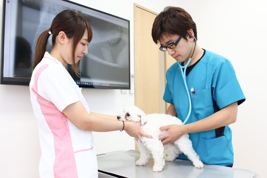 もふもふ動物病院