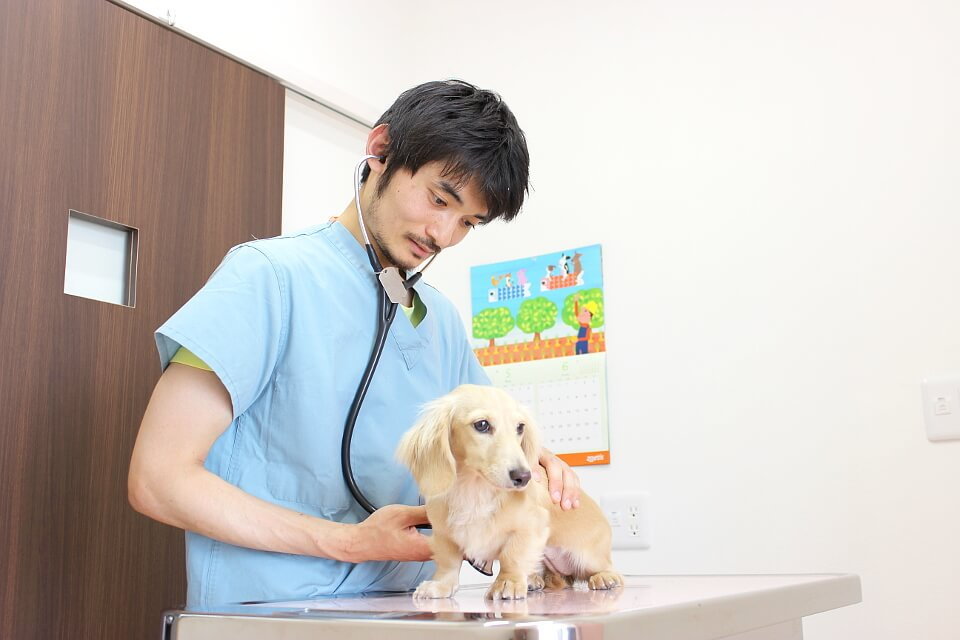 BiBi犬猫病院 診察中写真