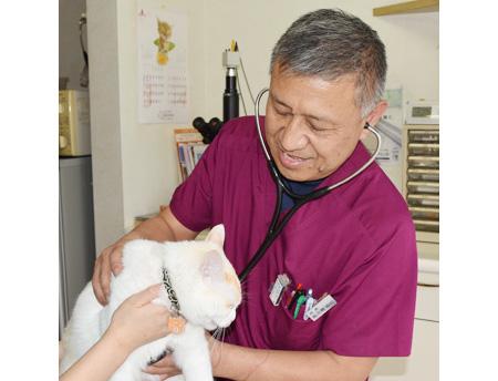 越谷市でおすすめの動物病院5選!口コミ掲載