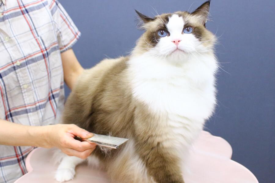 業界でも珍しい!ネコちゃん専門のトリミングサロン