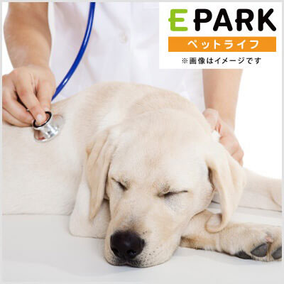 彩り動物病院